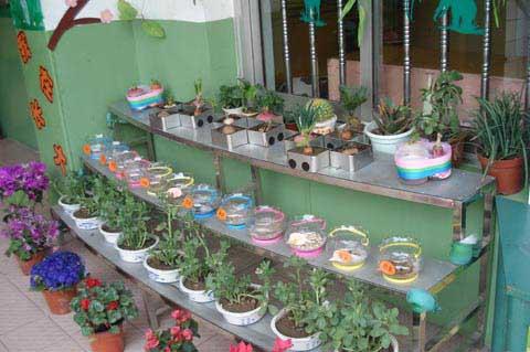 幼儿园大班自然角布置:花儿快长大