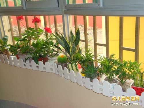 幼儿园小小班区角布置:漂亮的自然角长廊(2)