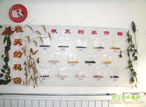 幼儿园中班秋天主题墙饰布置:秋天的农作物