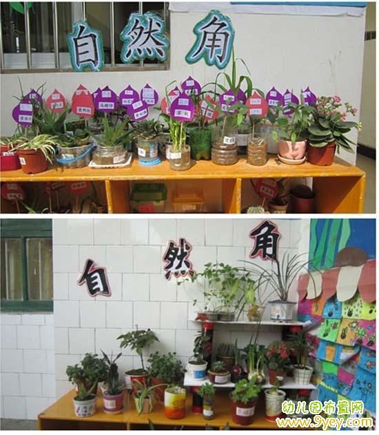 大班环境创设方案_幼儿园自然角创设方案(两例)_幼儿园布置网